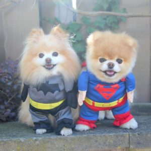 Doggie Halloween Costume Contest: October 21